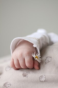 szülési terv, újszülött kisbaba kezében virág, kép.